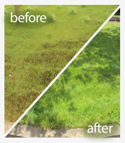 Lawn pest control treatment in Reading
