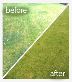 Scarifying lawn treatment in Reading