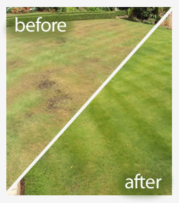 Lawn seeding treatment in Reading