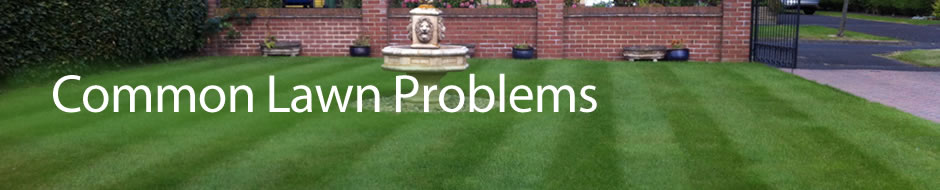 banner_lawn-problems